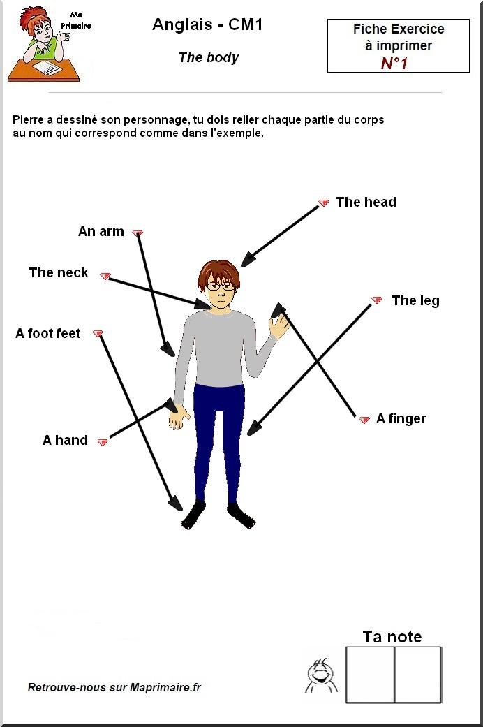 partie du corps humain en anglais au cm1
