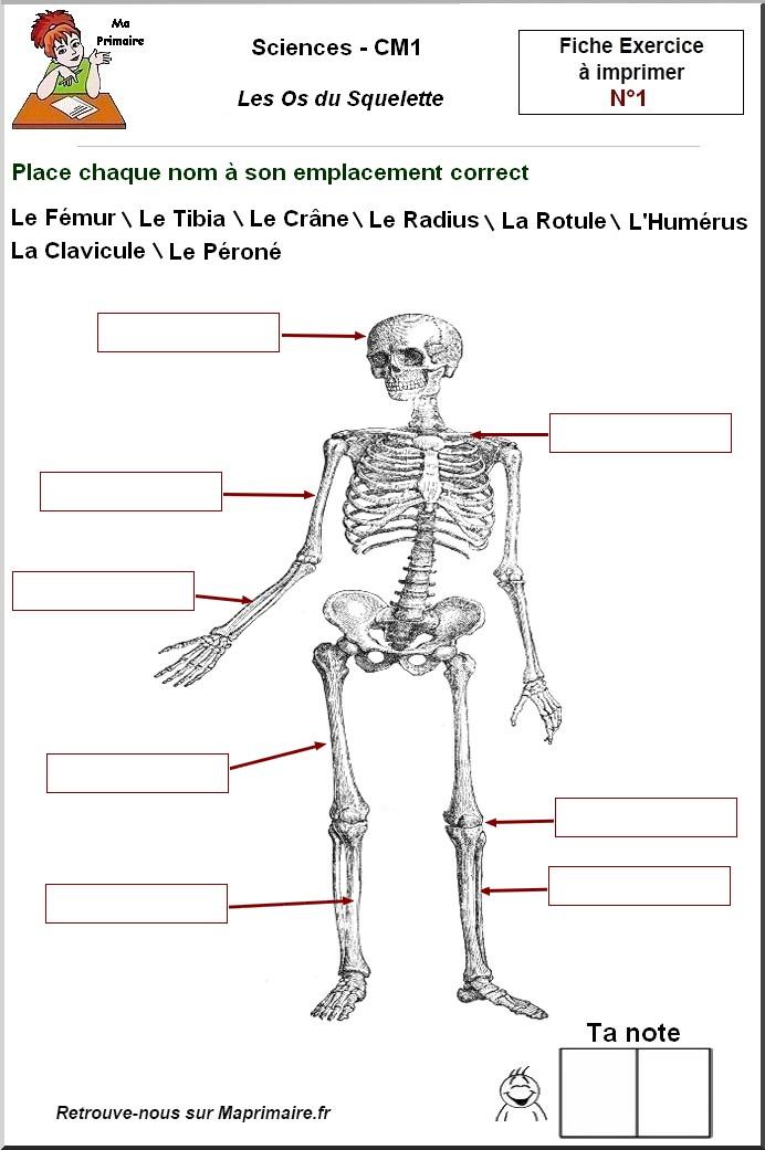 Le Squelette Au Ce1